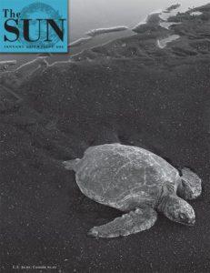 The Sun January 2017